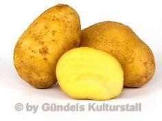 BOLZIGS-GELBBLUHENDE-alte-Kartoffelsorte-botanische-Besonderheit-Kartoffeln-1401