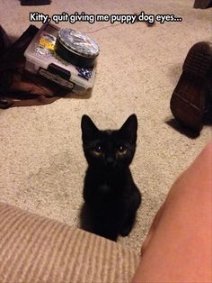 This kitten has got the puppy dog eyes down pat. // funny cat memes Anyone still ignorant enough to dislike black kitties? Look at that face. Funny Animal Memes, Cute Funny Animals, Funny Animal Pictures, Cute Baby Animals, Funny Cats, Funny Memes, Animal Pics, Hilarious Pictures, Cats Humor