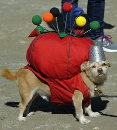 Pin Cushion Pup - This is just too funny, I couldn't pass it up annd this helpful doggie to this board....