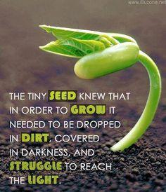 La pequeña semilla sabía que para crecer tenían que cubrirla de mierda, verse sumida en la oscuridad y que tenía que currárselo para alcanzar la luz...