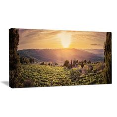 """DesignArt Vine Farm at Sunset Tuscany Panorama Photographic Print on Wrapped Canvas Size: 20"""" H x 40"""" W x 1"""" D"""