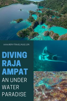 Diving Raja Ampat in West Papua, Indonesia! This video features underwater footage of sea turtles, tons of fish, sea fans, a wide variety of corals, and drone footage of the islands of Raja Ampat.