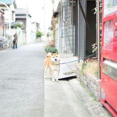 the guard dog, so cute