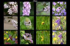 Bijen collage