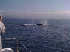 Whale watching on Maui.