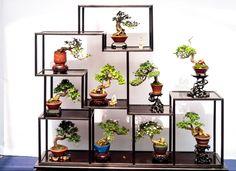 40 Best Bonsai Trees Ideas For Home Decor Inspiration Bonsai Plants, Bonsai Garden, Bonsai Trees, Mame Bonsai, Plantas Bonsai, Small Backyard Design, Mini Fairy Garden, D House, Diy Plant Stand