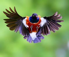 {superb starling} by Dajan Chiou on 500px