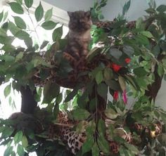 Beautiful, Luxury Cat Trees for Spoiled Rotten Kitties! A Fantasy Forest Custom Cat Furniture.