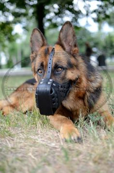 Leather adjustable straps make it possible to adjust the muzzle to the size fitting your dog and they will not tear and wear quickly. Description from german-shepherd-dog-breed-store.com. I searched for this on bing.com/images