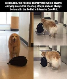 Wholesome Animal Stories To Start The Week Off Right - World's largest collection of cat memes and other animals Dogs And Kids, I Love Dogs, Cute Funny Animals, Funny Cute, Hilarious, Animals And Pets, Baby Animals, Smart Animals, Cute Puppies