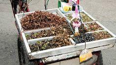 """""""Selvityksen mukaan ihmiset ympäri maailman syövät 1900 hyönteislajia. Eniten syödään kovakuoriaisia, toukkia, mehiläisiä ja erilaisia heinäsirkkoja."""""""