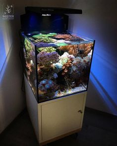 Year 4 day and another FTS of the nano reef Coral Reef Aquarium, Saltwater Aquarium Fish, Nano Aquarium, Aquarium Design, Saltwater Tank, Marine Aquarium, Marine Fish Tanks, Marine Tank, Aquascaping