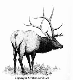 Elk drawing Pencil Art Drawings, Animal Drawings, Elk Drawing, Elk Tattoo, Whitetail Deer Pictures, Deer Sketch, Scratchboard Art, Antler Art, Antique Illustration