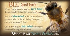 The most in-depth Bee Symbolism & Bee Meanings! Bee as a Spirit, Totem, & Power Animal. Plus, Bee in Celtic & Native American Symbols and Bee Dreams, too!