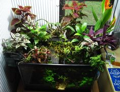 aquarium with emergent plants - like Aquarium Aquascape, Aquascaping, Planted Aquarium, Nano Aquarium, Aquarium Design, Aquarium Fish, Aquarium Ideas, Tropical Freshwater Fish, Tropical Fish Tanks