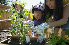 Mother and daughters examining tomato plant in garden