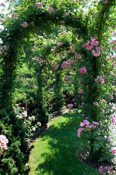 arch way lined with lush green vines w/ beautiful pink flowers and shrubbery