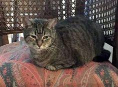 LOST CAT: 05/25/2017 - Wilton Manors, Florida, FL, United States. Ref#: L31153 - #CritterAlert #LostPet #LostCat #MissingCat