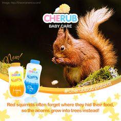 We need them here! 😍💡🌰 #CherubBabyInform #squirrels #trees #accidentalplanting #NewCherubBabyPowder #Hypoallergenic Cherub Baby, Baby Powder, Squirrels, Trees, Twitter, Animals, Chipmunks, Animales, Animaux