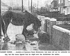 Paper Cutting is wrong it is Le Fanu Road oppsite Tim Youngs Pub 1970 Thanks to Martin Coffee for the Photo