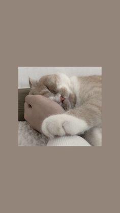 cat wallpaper These loveable cats will make you happy. Cats are amazing friends. Funny Cat Wallpaper, Tier Wallpaper, Cute Cat Wallpaper, Mood Wallpaper, Aesthetic Pastel Wallpaper, Locked Wallpaper, Kawaii Wallpaper, Cute Cartoon Wallpapers, Animal Wallpaper