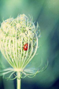Marianne LoMonoca's ladybird - lovely colour palette