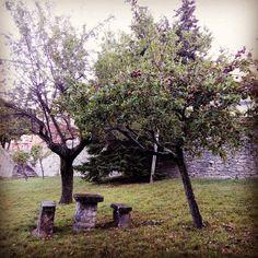 Ho scelto i colori autunnali di questo melo del piccolo giardino vicino alla scuola, come tema invernale del blog. Spero vi piaccia.