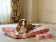 The top hotels going to the dogs: Palazzo Versace and Langham open doors for pampered pets