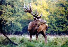 Denmark History, Hunting, Wildlife, Red Deer, Animales, Fighter Jets