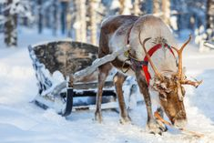 The Very Real Reindeer and How They Became Associated With Christmas