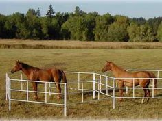 Travel Corrals Testimonials of Corrals2Go! Portable Corrals for Horses