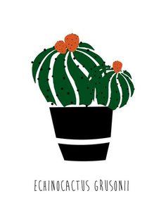 Kit Placas Decorativas Cactus II