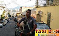 TAXI DOG MONTANHA TRANSPORTE DE ANIMAIS NO RIO DE JANEIRO: Linda GABI18/12/2015 -- Essa linda pug comigo aí n...