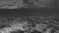 black and white water ocean waves black and white gif