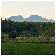 Beautiful Bali. So nice to be out where there the sound of cows and chickens and birds and crickets rule over traffic and horns and big city noise. #bali #holidays #liburan #Lebaran #bliss #beautiful