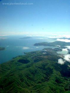 Nouvelle Zélande, des paysages ondoyants et verdoyants grâce au climat très pluvieux. www.plantesdusud.com
