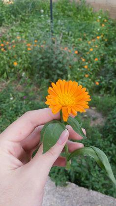 #Flower #orange #summer