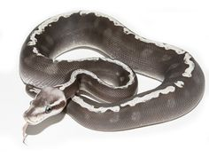 40 Awesome pastel mojave ghi