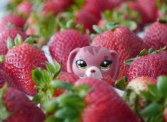 Littlest pet shop picture (c) mistinglps