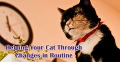 Helping Your #Cat Through Changes in Routine