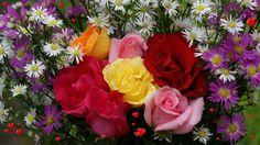 flower for large desktop 1920x1080
