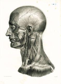 1836 Muscles du Cou, Tête Profil, Veines, Artère carotide, Crâne, Planche Anatomique Bourgery, Poster Anatomie Medecine de la boutique sofrenchvintage sur Etsy