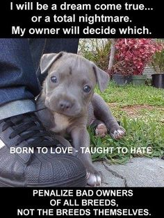 Truth, I had a pitbull and he was the sweetest thing! But everyone was so afraid of him because of what they heard about pitbulls. Its all about how you raise your dog. Love My Dog, Puppy Love, Continental Bulldog, Animals And Pets, Cute Animals, Stop Animal Cruelty, Pit Bull Love, Animals Beautiful, Dogs And Puppies