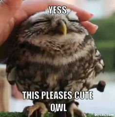 Cute owl Funny Cute, Funny Owls, The Funny, Funny Birds, Adorable Animals, Animals Beautiful, Beautiful Birds, Animals Amazing, Interesting Animals