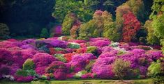 ★ Wild Pink ★ Le meraviglie di Villa Carlotta Foto di Mary Guzzi https://www.facebook.com/federica.marcotriggiano