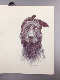 Dog on Behance I love this sketch.  It captures character and mood, and also reminds me of my dog.