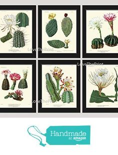 Botanical Print Set of 6 Antique Beautiful Cactus Plant Blooming White Pink Yellow Flowers Tropical Desert Garden Nature Home Room Decor Wall Art Unframed from LoveThePrint