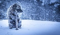 Winter is coming II Full Hd Wallpaper, Winter Is Coming, Winter Wonderland, Lion Sculpture, Snow, Statue, Dogs, Outdoor, Image