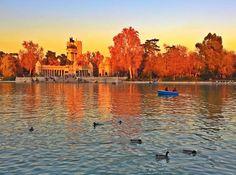 Parque Retiro, Madrid. Photo courtesy of kwesterbeck on Instagram.
