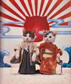 Geisha kitties